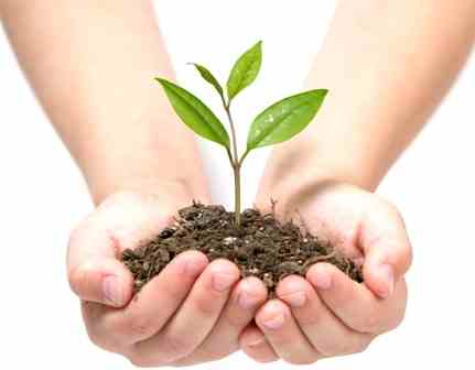 plant_in_hands_small